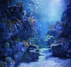 2010年武汉地海洋世界